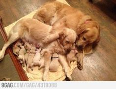 Just puppies with their mom and grandma... so damn cute