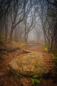 ✯ Craggy Gardens - Blue Ridge Mountains, North Carolina