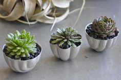 GREAT hostess gift:  succulents planted in vintage jello molds  Lila B Designs Succulents in Jello Molds, Gardenista