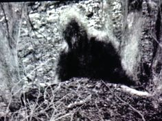 Kentucky Grassman (AKA Bigfoot, Sasquatch)