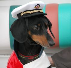 "Dachshund ""Harold"" owned by Connecticut State Representative Auden Grogins. Harold is her pride and joy. Rep. Grogins represents Bridgeport, CT, and has served as a Meet the Breeds Honorary Chair every year since the event began in 2009."