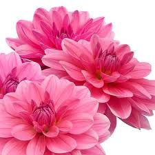 I want pink flowers :)