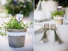 potted wedding favours