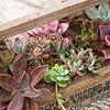 an old wooden toolbox filled with succulents :)