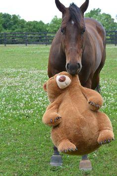 A horse  his teddy bear....