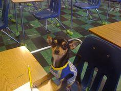 barron is a studious boy!