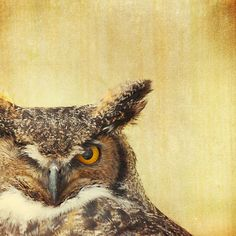 SALE Owl photo bird prints owls art canadian wildlife by bomobob