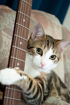 """A member of the """"Stray Cats"""" kool kool kitty kitty cat"""