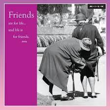 essay about best friend