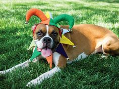 Honor your pup's inner goofball with an easy Halloween costume that celebrates his true colors.