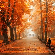 orang, park, travel photos, season, autumn leaves
