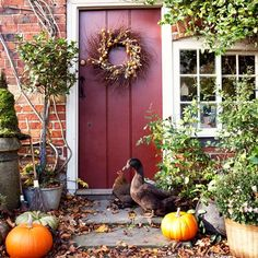 red doors, country cottages, back doors, primitive front doors, autumn, countri cottag, fall, cottage decorating, cottag decor
