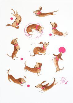 Doxies - Character Study - Alisa Coburn Illustration
