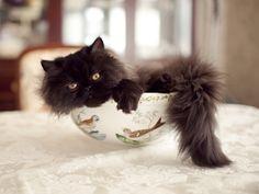 Bowl Cat.