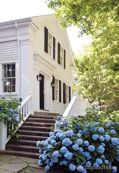 Colonial home with blue hydrangeas