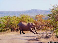 Weirdest Job Interview Questions: How Would You Get an Elephant Into a Fridge?