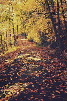 Beautiful running trails - much more exciting than painful foot-slamming concrete runs!