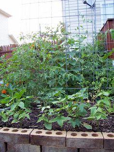 garden trellis for cucumbers???