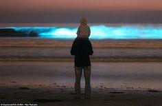 Doug Perrine, um dos mais famosos fotógrafos da fauna marinha, captou um momento de rara beleza em sua viagem a Vaadhoo, uma das ilhas Raa Atoll, nas Maldivas. O efeito neon azul, resultado de uma reação química chamada bioluminescência, é totalmente natural e não precisou de nenhuma edição do fotógrafo