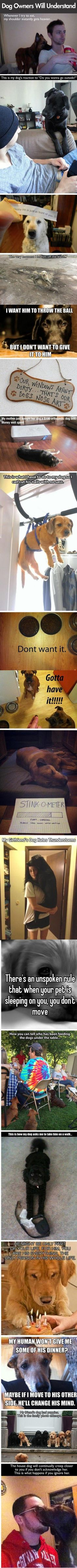 Hilarious images of the day -82 pics- Dog Owners Will Understand (Compilation)
