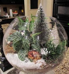 """Christmas Terrarium ... just add a few  real plants (of your choice) in a layer of pebbles, dirt and sphagnum moss ... and then add """"artificial"""" Christmas trees and snow ... you can also be creative and add Christmas figurines ... just have fun creating your design!"""