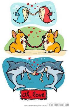 Sharing food = Love #sharkweek