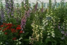 The Impressionist Lens goes to the Chelsea Flower Show and finds #monetsgarden. Awesome!