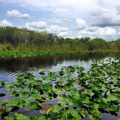 Adventure in the Florida Everglades. Photo courtesy of erinkate25 on Instagram.