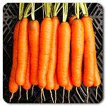 Organic Yaya F1 Hybrid Carrot