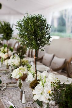 Topiary centerpieces are fun and unique for special day!  #wedding #event #party #centerpiece #topiary #unique #tree #nature   http://www.mybigdaycompany.com/