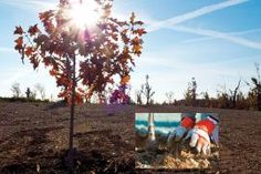 May 2013 - Volume 74, Issue 5: After the Storm: A Joplin Update   Missouri Department of Conservation