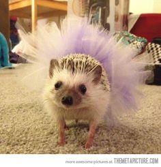 Just a hedgehog in a tutu