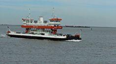 Galveston Island Fer