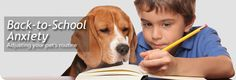 Fall: Back to School Pet Tips - North Shore Animal League America
