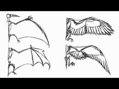 Fly Cycle Guide