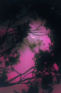 crescent moon in PURPLE skies