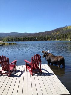 This would be my dream. Mountains,  lake, dock, and a Moose! How perfect!