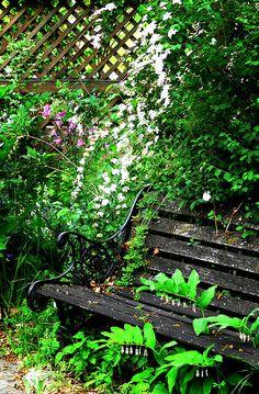 Forgotten bench