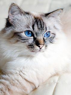♥•✿ڿڰۣ(̆̃̃•Aussiegirl #Cats