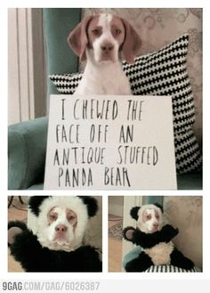 stuffed toys, face off, dog shame, dogs, the face, pet, dog humor, animal shaming, pandas