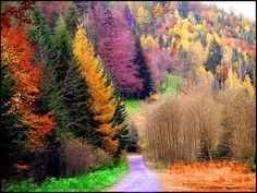 ♥ forests, tree, christmas holidays, autumn, color, leav, beauti, rainbow, fall beauty