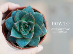 I'm glad I'm not the only one that has a hard time keeping alive succulents, you know the plants people say are hard to kill! Guide: how to care for your succulents