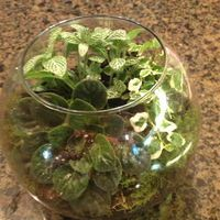DIY Terrarium- Frugal gift idea