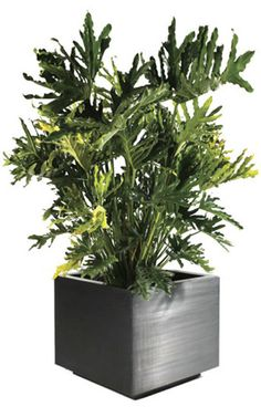 Comes in Corten--We can put the ferns in here.      Empire Style Metal Planter | Planterworx | Corten Steel, Stainless Steel & Aluminum Planters, Planter Boxes | Custom Metal Fabrication | Planterworx
