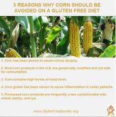 5 Reasons you should avoid corn on a gluten free diet... http://www.glutenfreesociety.org/gluten-free-society-blog/corn-mold-toxins-fumonisins-in-the-gluten-free-diet/