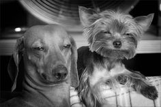 :)  #dogs #photography #funny