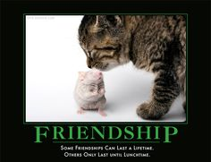 Some friendships last a lifetime. Some only last until lunchtime.