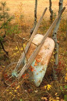 . patina, barrels, wheelbarrow, yard, season, autumn, childhood, garden, wheel barrel