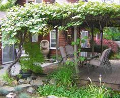 Grape covered patio and other ideas for a suburban backyard that you can harvest.