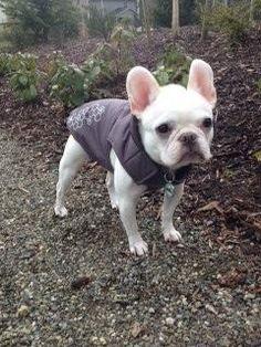 Not Available B Terrier City Of Toronto Toronto Gta Image  Animals Pinterest Terrier
